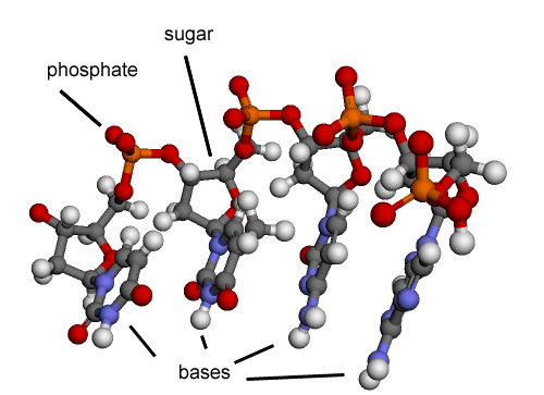 pictures of nucleic acid